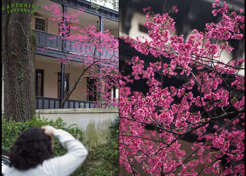 ©2014 Capturing Savannah_Spring-flwrs.1.jpg