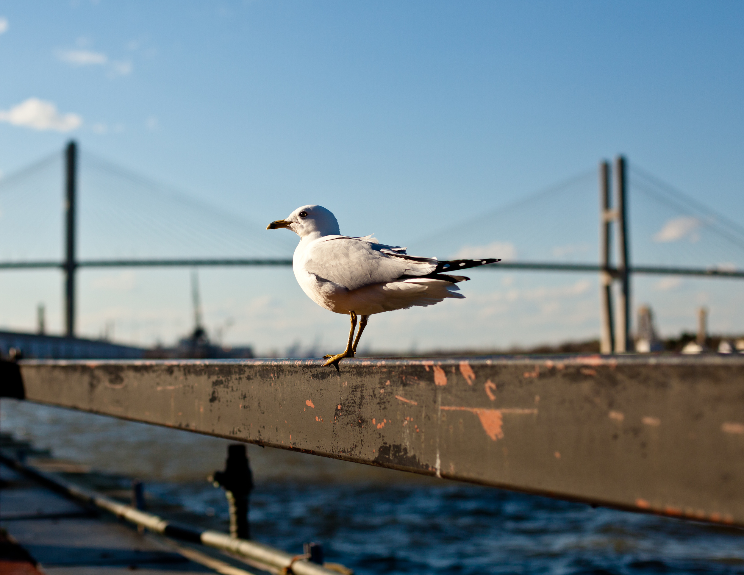 © 2012 Pablo & Britt Photography LLC Top_10_PhotoSpots_#1_Talmadge_Bridge_1.jpg
