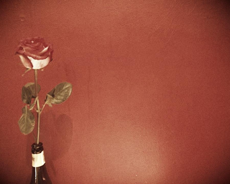 rose (2).jpg