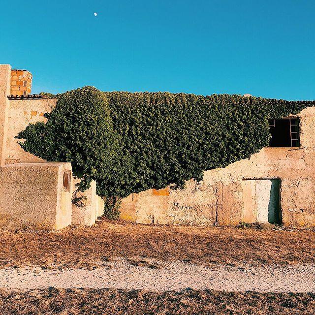 🇵🇹 Cabo Espichel. Portugal. 🇵🇹 #portugal #visitportugal #p3_top #p3 #xplortugal #igers #lisboa #lisbon #iphone8plus  #iphone_only #vsco #vsco_portugal #ig_portugal #lisbonlovers #europe #p3top #timeoutlisboa