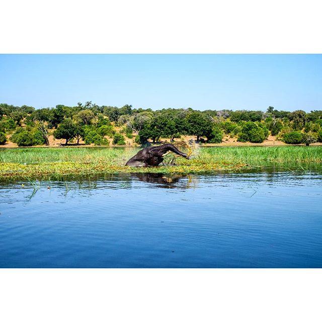 A lone elephant cools off in the Chobe River, Botswana. . . . #africa #botswanasafari #botswana #chobenationalpark #chobe #choberiver #elephant #fujifilm