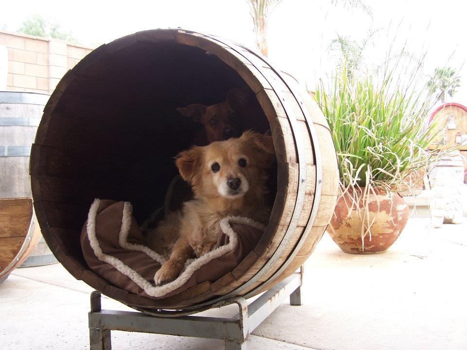 King Barrel pet house 2.jpg