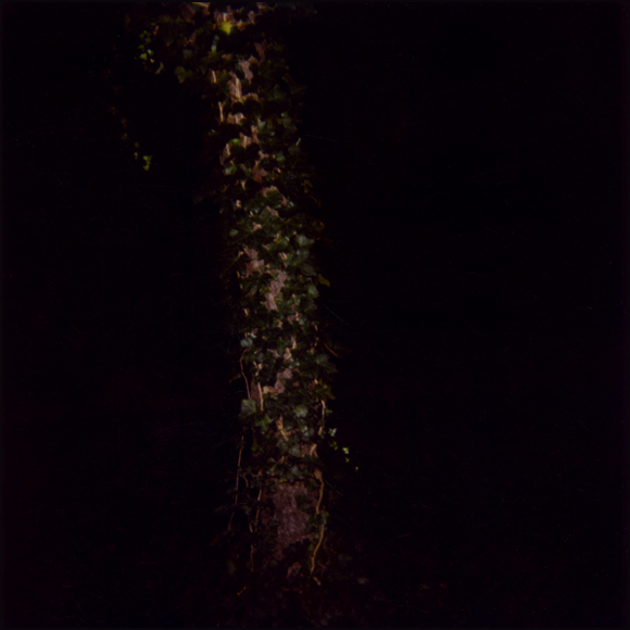 ivy-on-trees.jpg