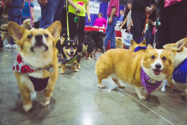 Portland ,  Oregon  - NW Pet Expo