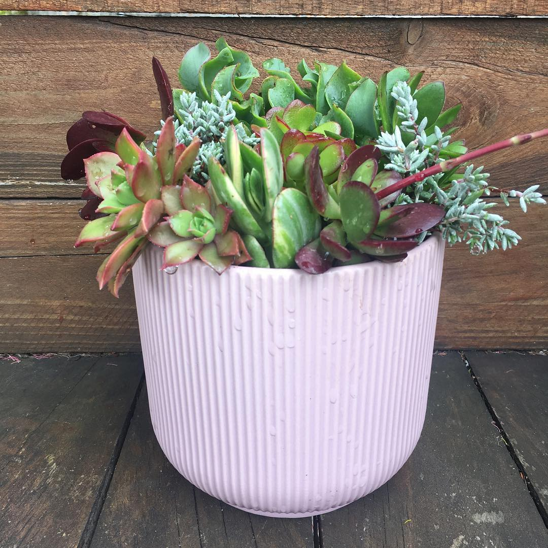 I Wet My Plants - donating 10% of all sales throughout the month of November.