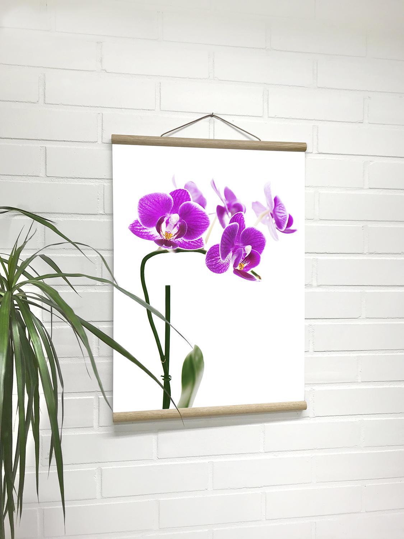 lowres_dialab_poster_hanger_julistelista_flower.jpg