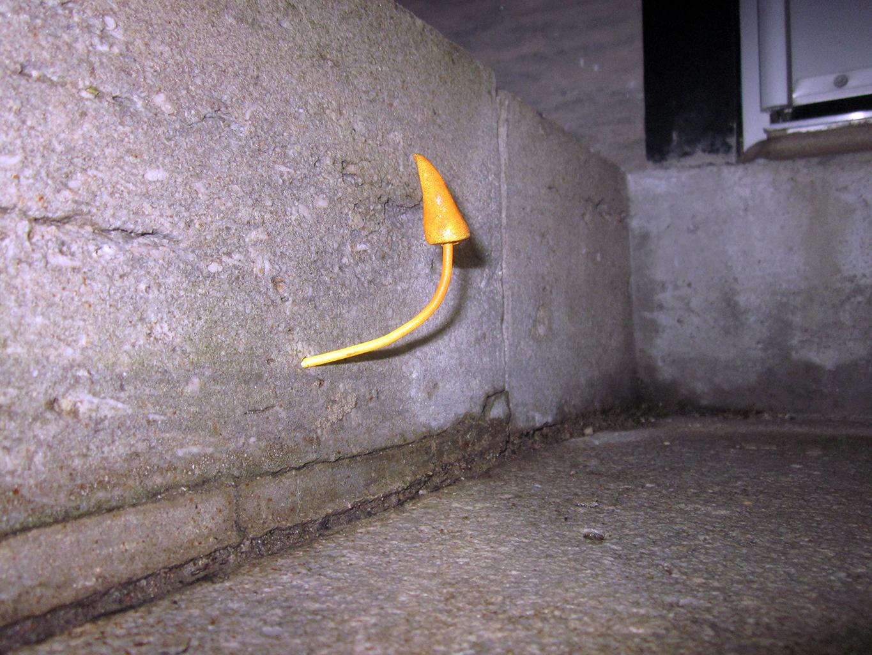 Urban Mushroom Installation 7(2).jpg