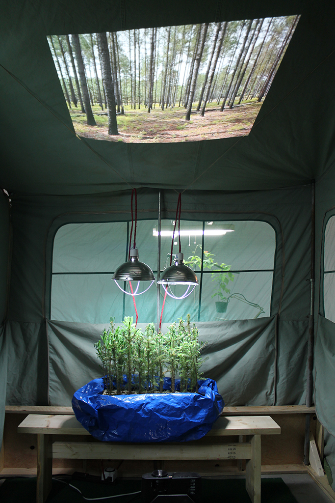 Tent Trailer Tree Theatre