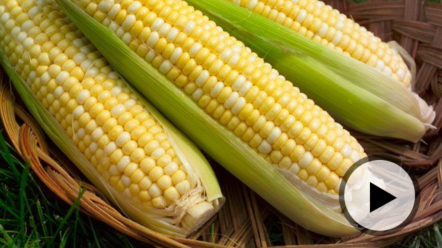 GMOs: Researchers debate the safety of genetically modified foods