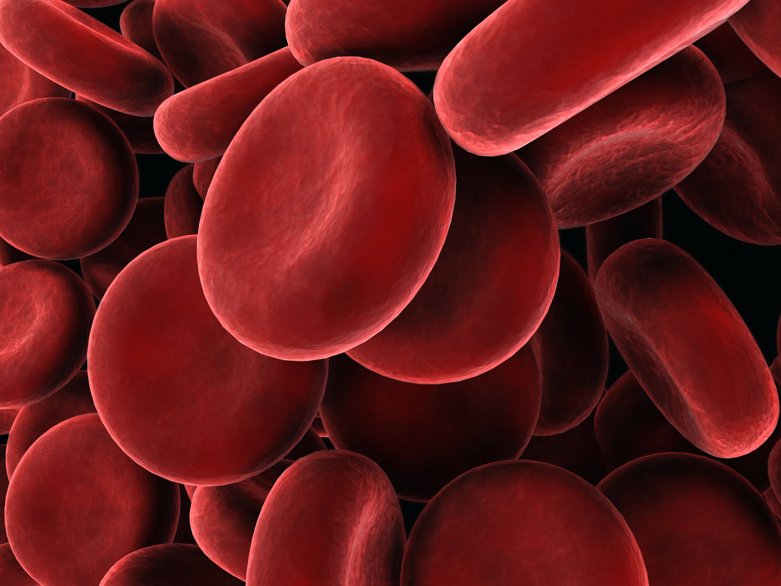 red blood cells photo.jpg