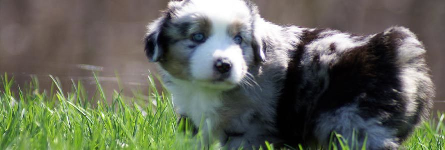 splash-mini-aussie-0511.jpg