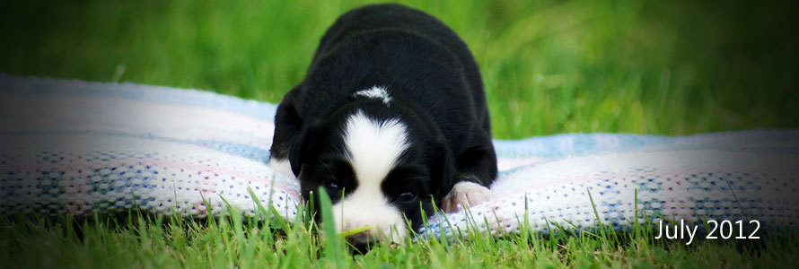 Kylie and Eli had a litter of seven puppies on the 19th of July 2012. Click the image to view!