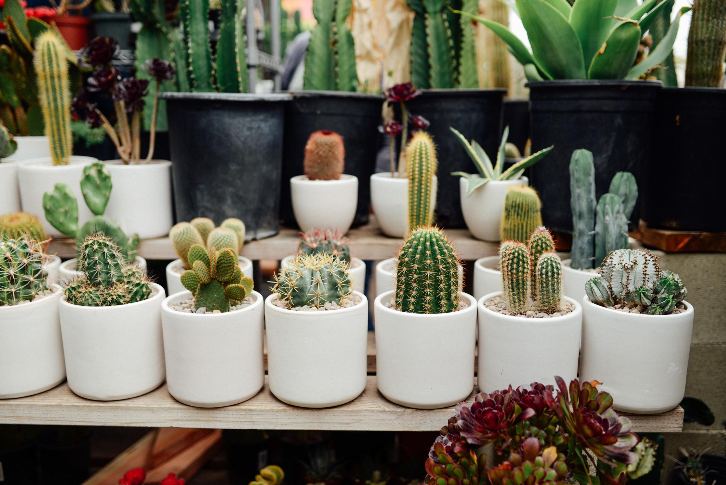 cute cacti-1.jpg