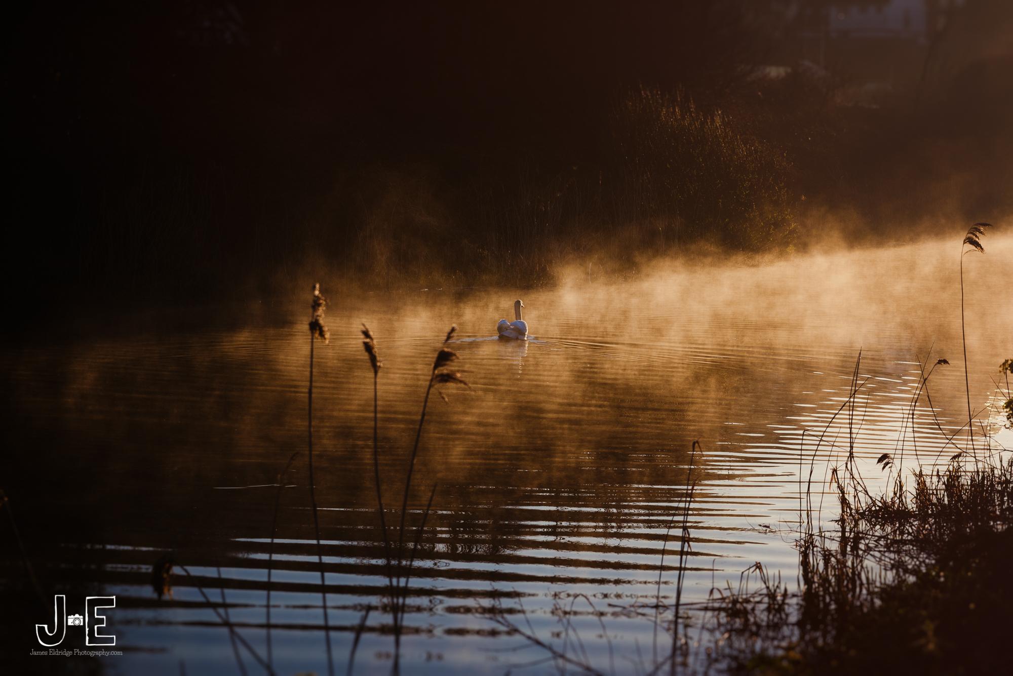 Hythe canal swan lake
