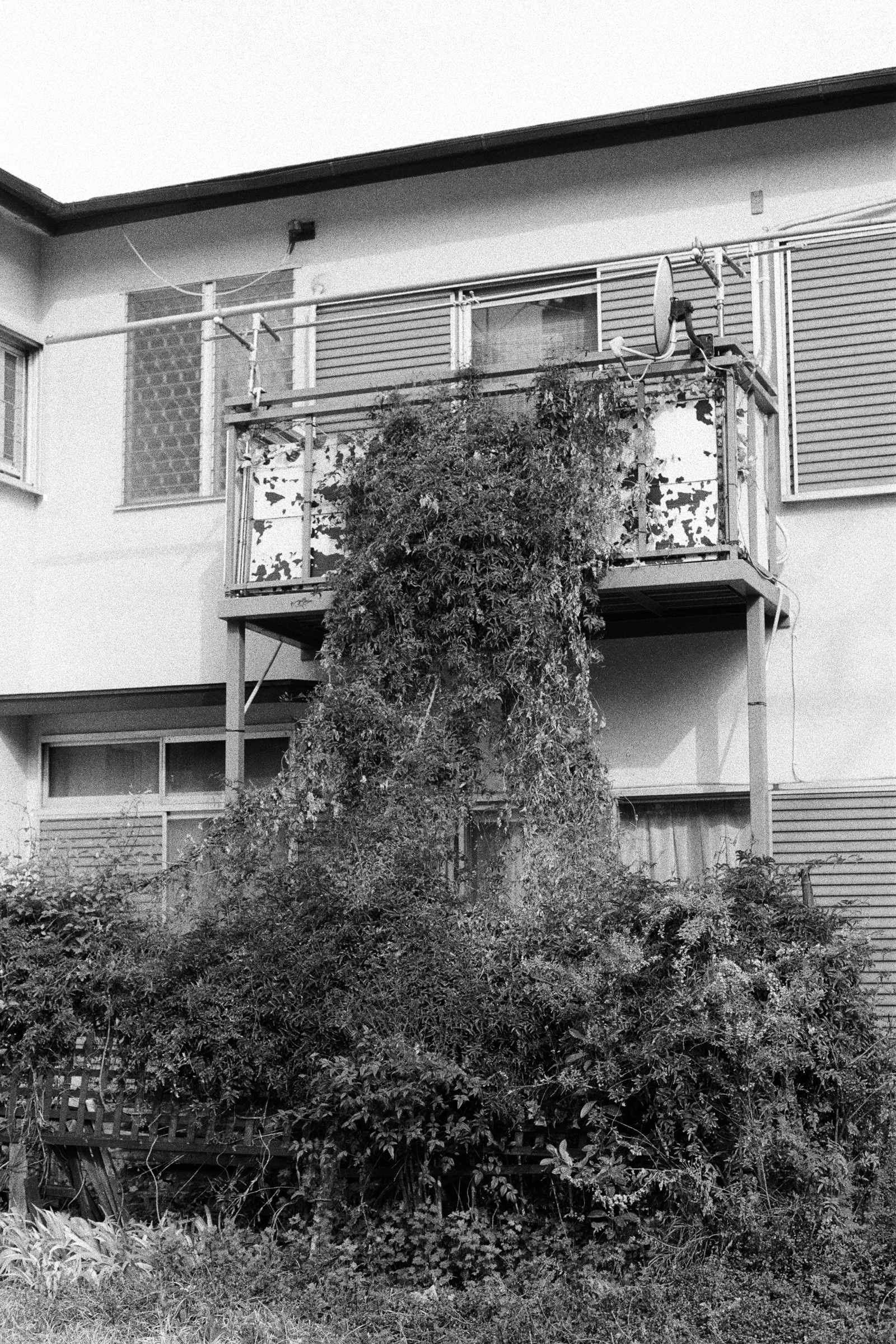 Vine and Balcony