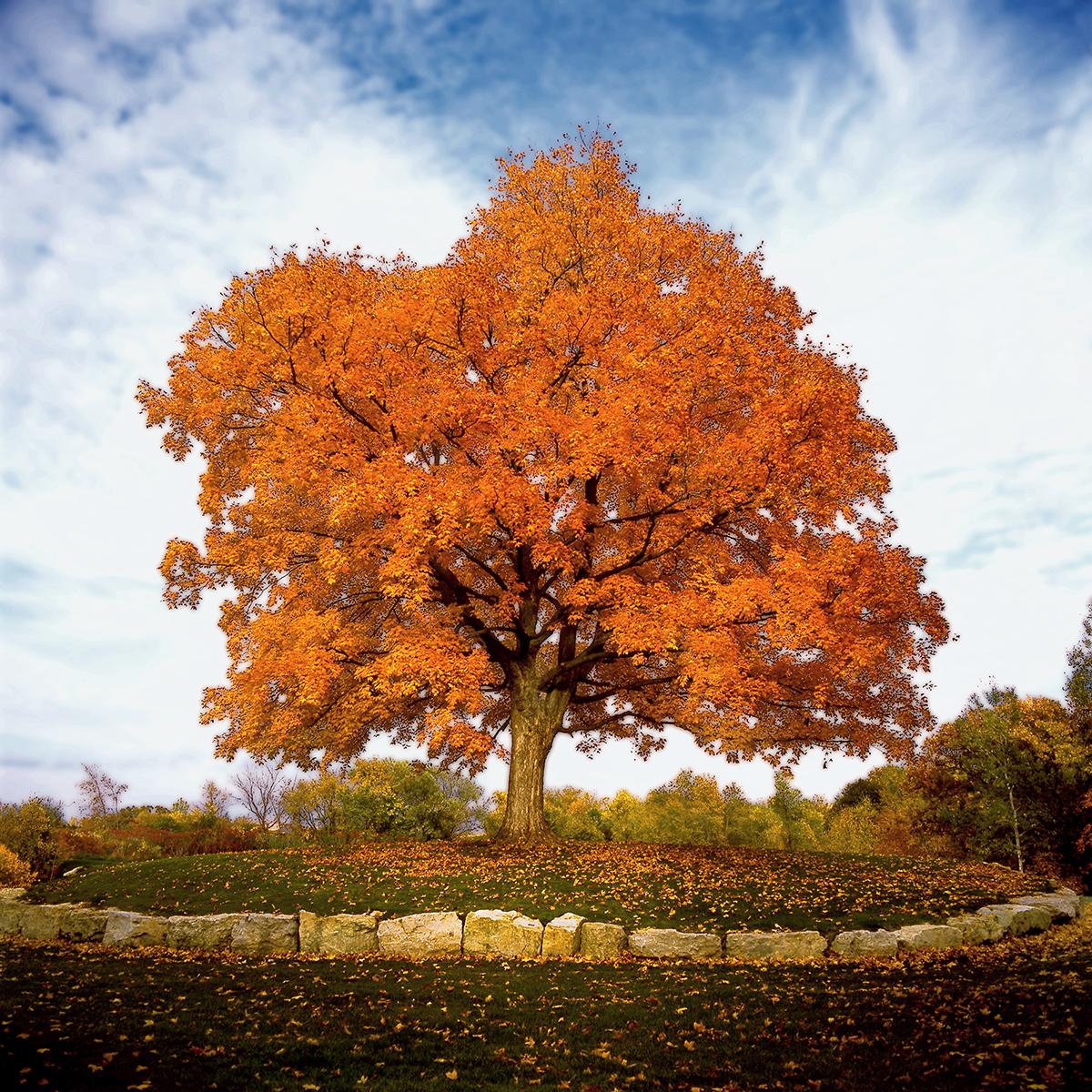Tree on Hole 5 tee box