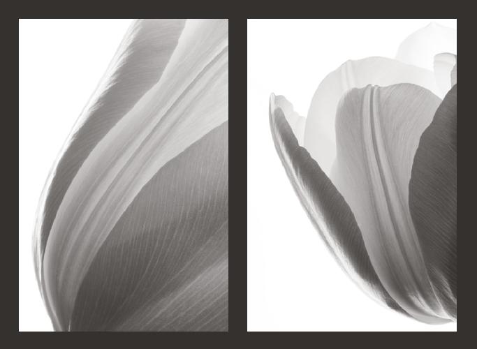 Lynn Garell  Tulips