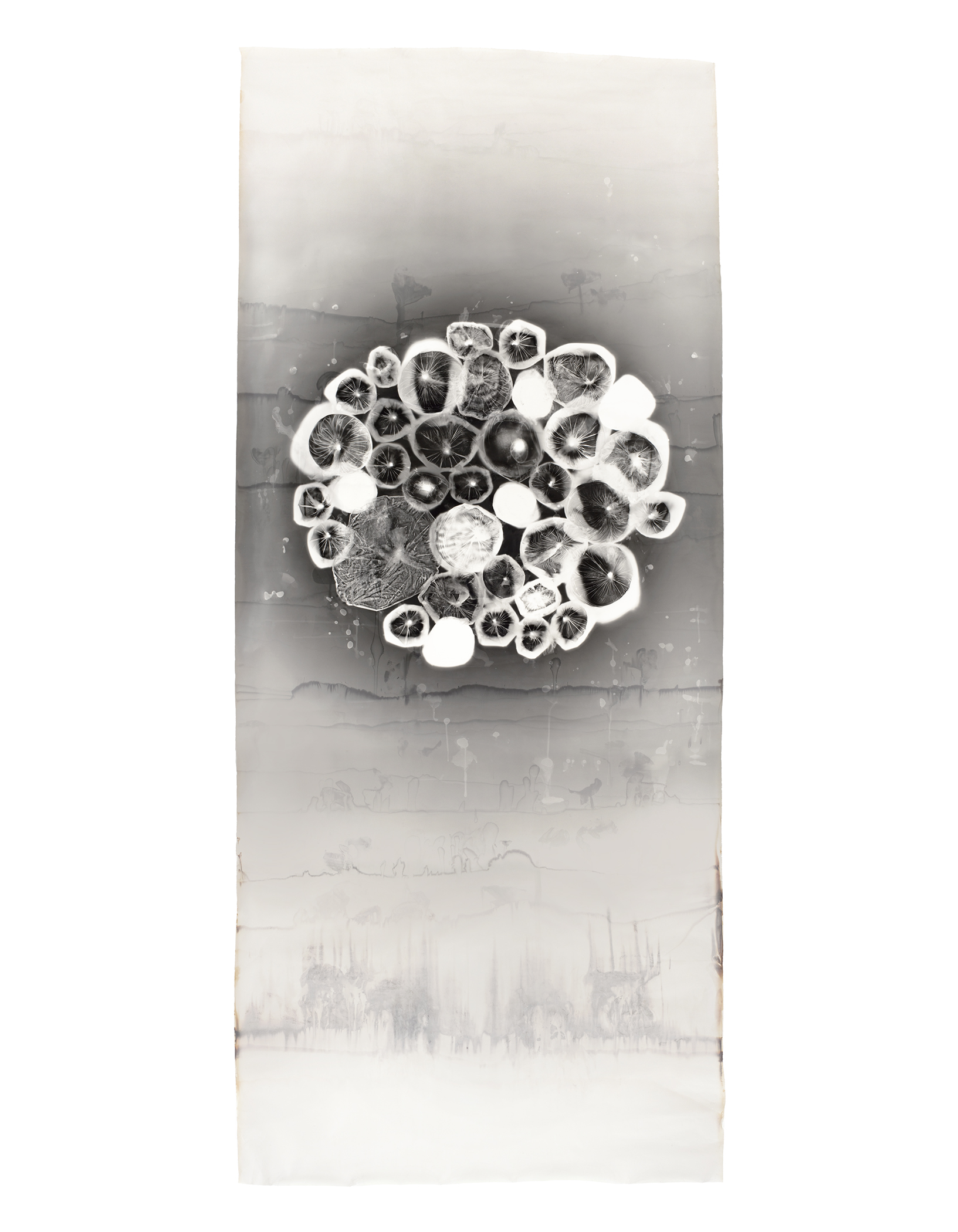 """Bouyancy  contact print of bags of water & raw eggs  50"""" x 115"""""""