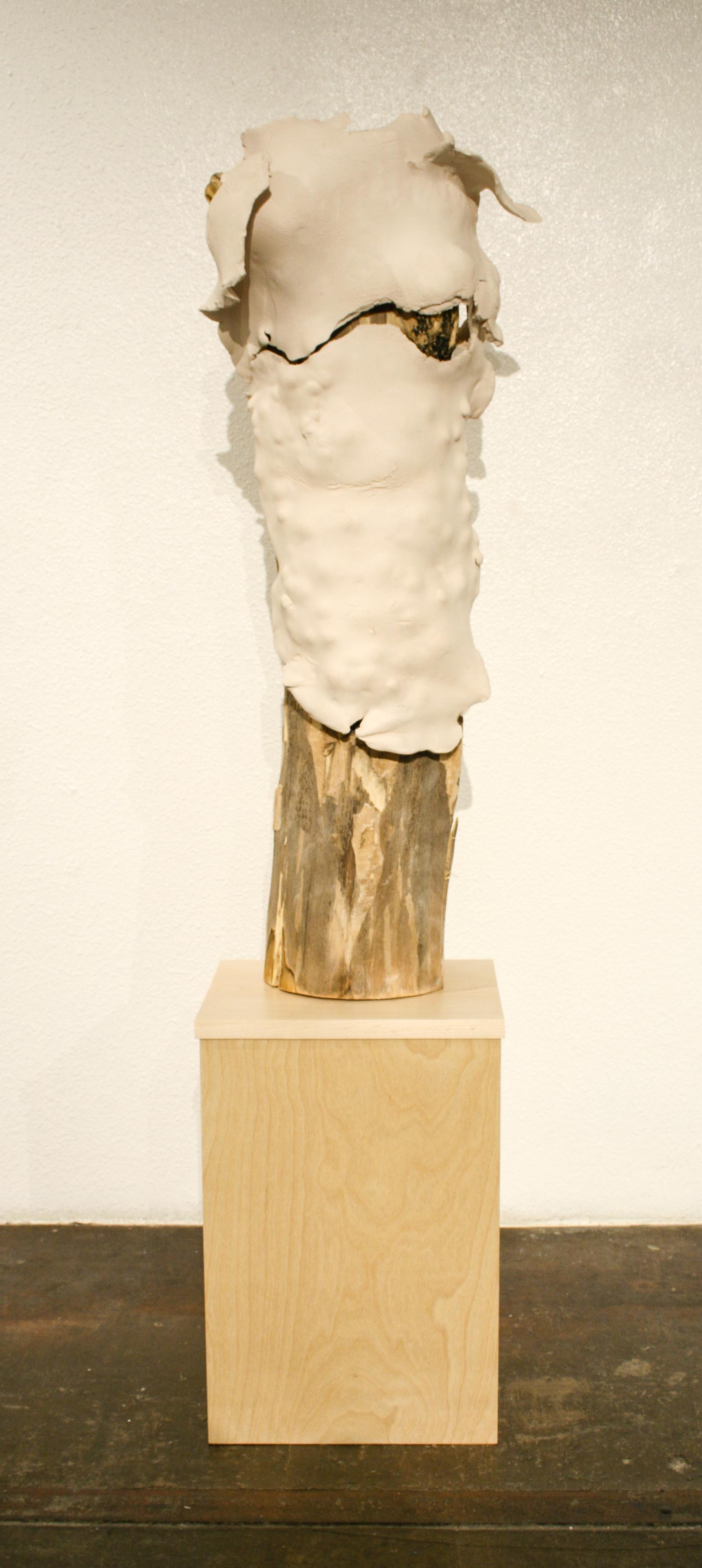 """Kim Ferrer  """"Cellular Memory""""  64x12  Clay, wood"""