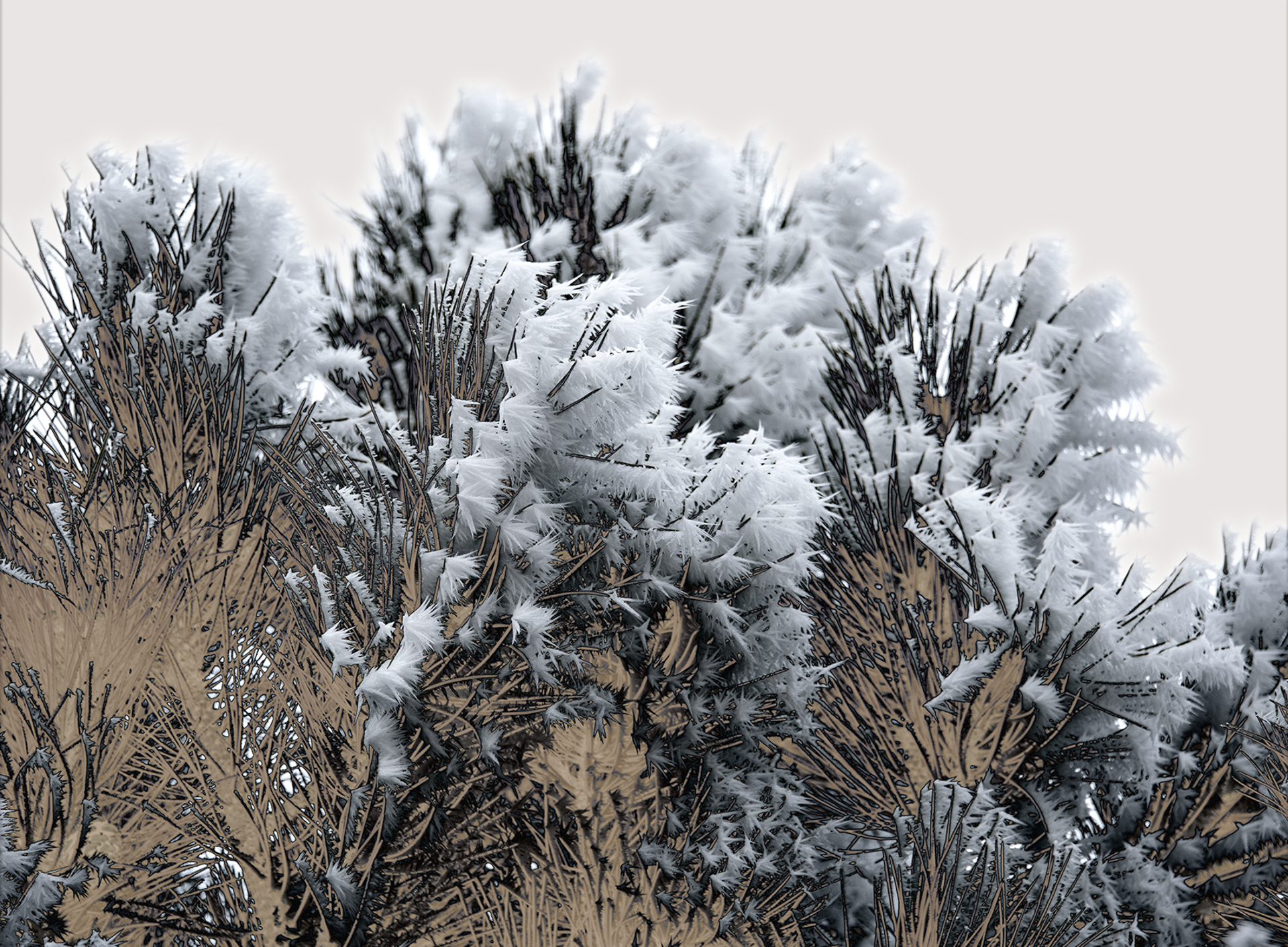 Pine Frost #1