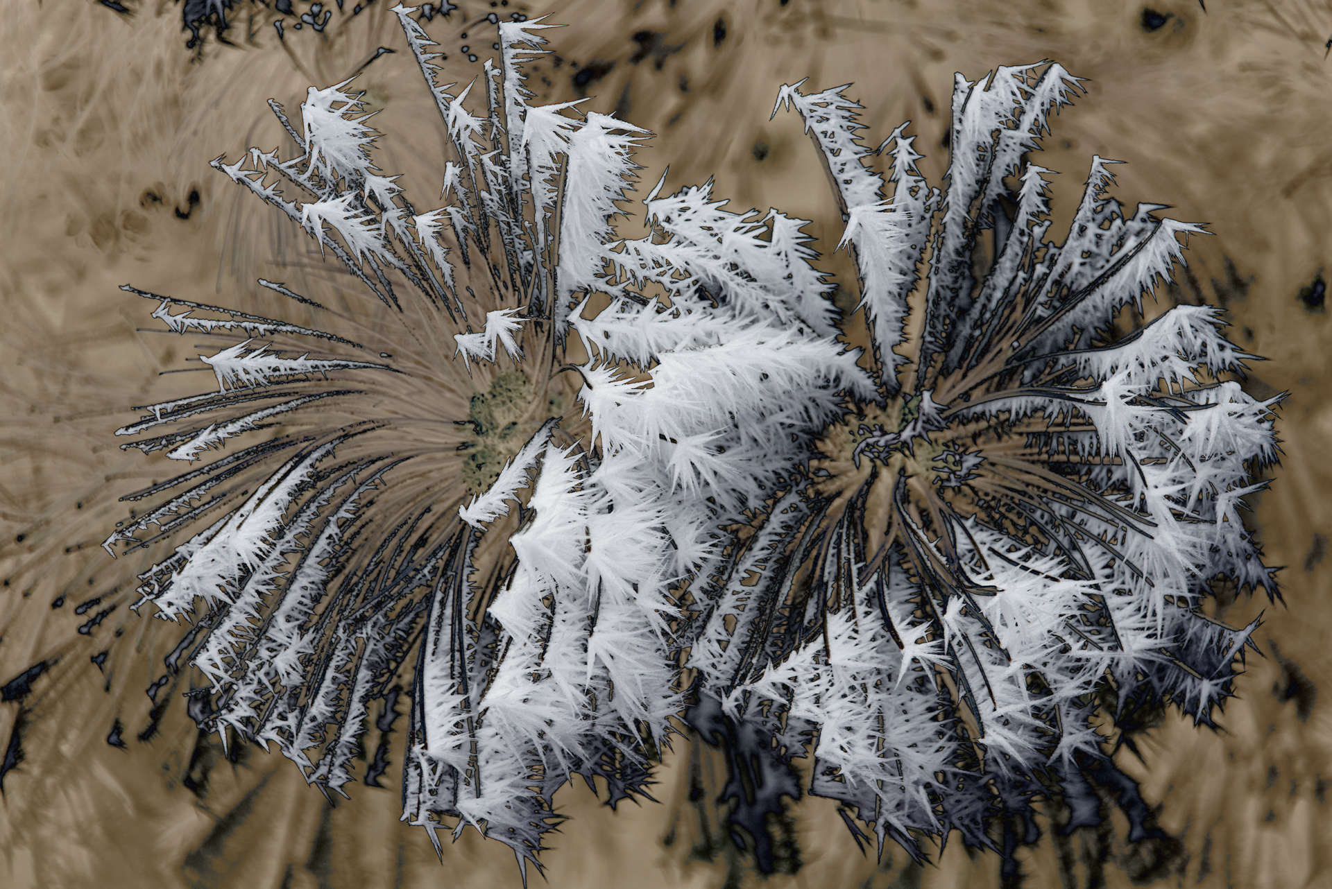 Pine Frost #3