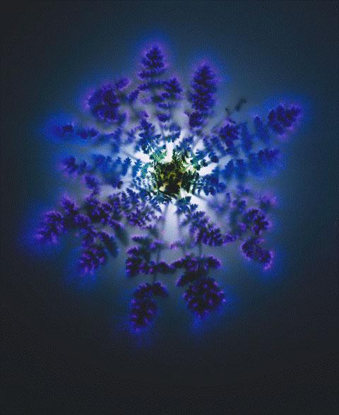 Robert Buelteman  Green Mandala  36x30  chromogenic development print