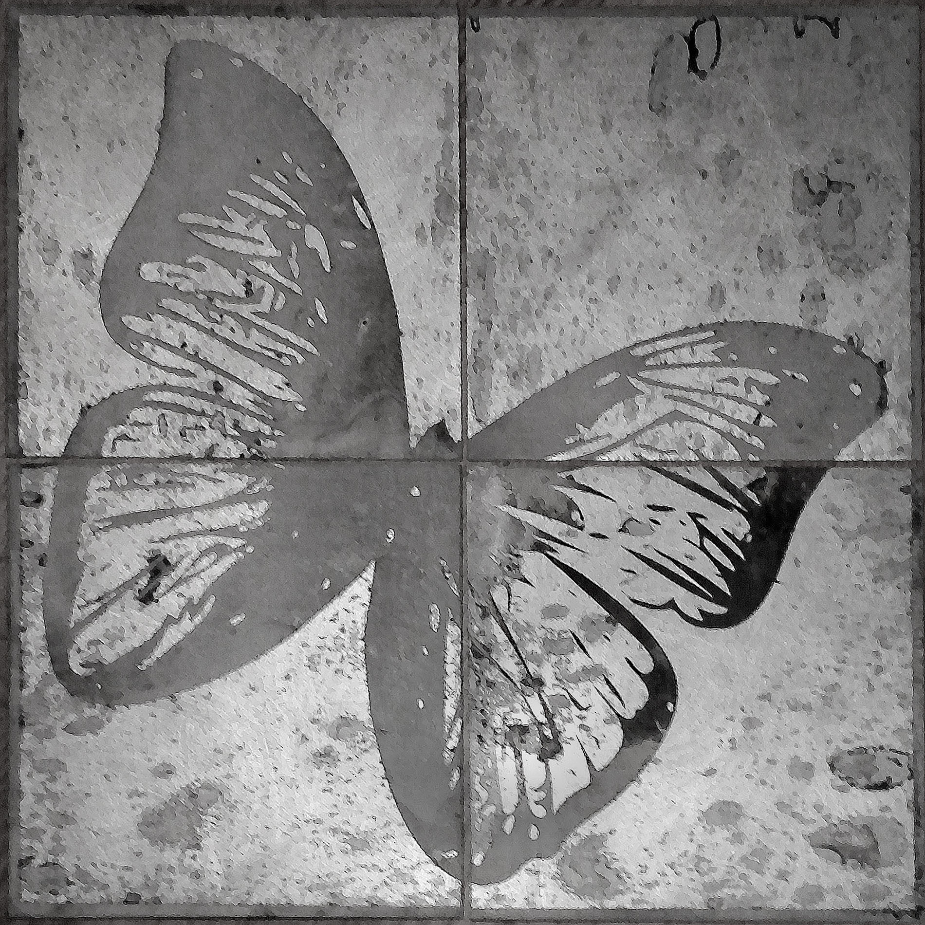 Faded Butterfly  22 x 22  caustigram