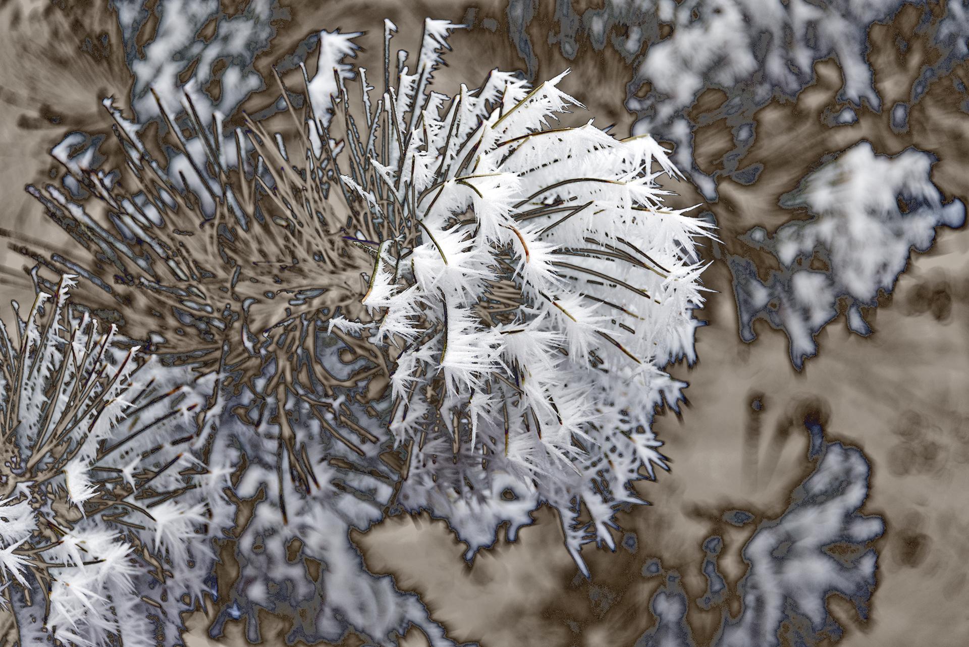 Bonny Lhotka  Pine Frost #4  UV & borosilicate pigments  30x40