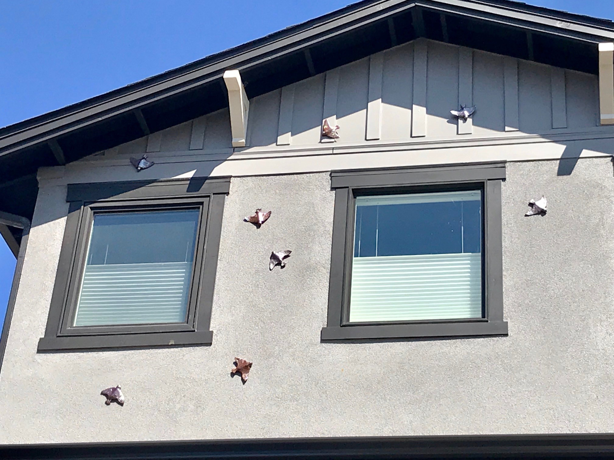 Swallows installed