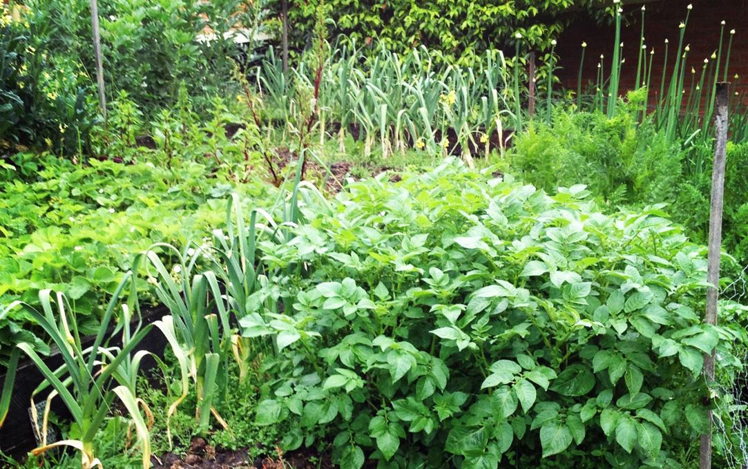 GardenOne.jpg