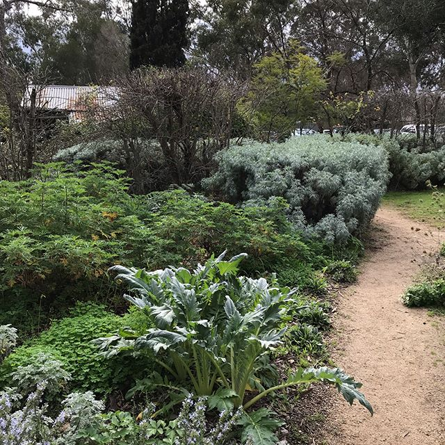A quick trip to the city and the kitchen gardens at @heidemoma  to inspire for a potential kitchen garden installation at work @baileys1870 - looking forward to the challenge ahead! #kitchen #garden #organic #winery #northeastvic
