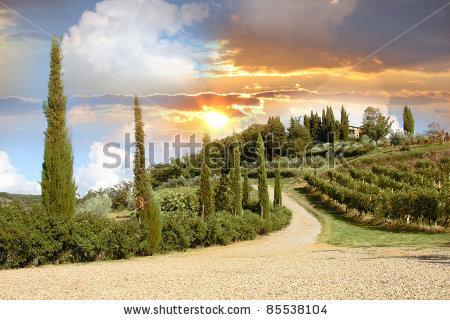 stock-photo-chianti-vineyard-landscape-in-tuscany-italy-85538104 (1).jpg