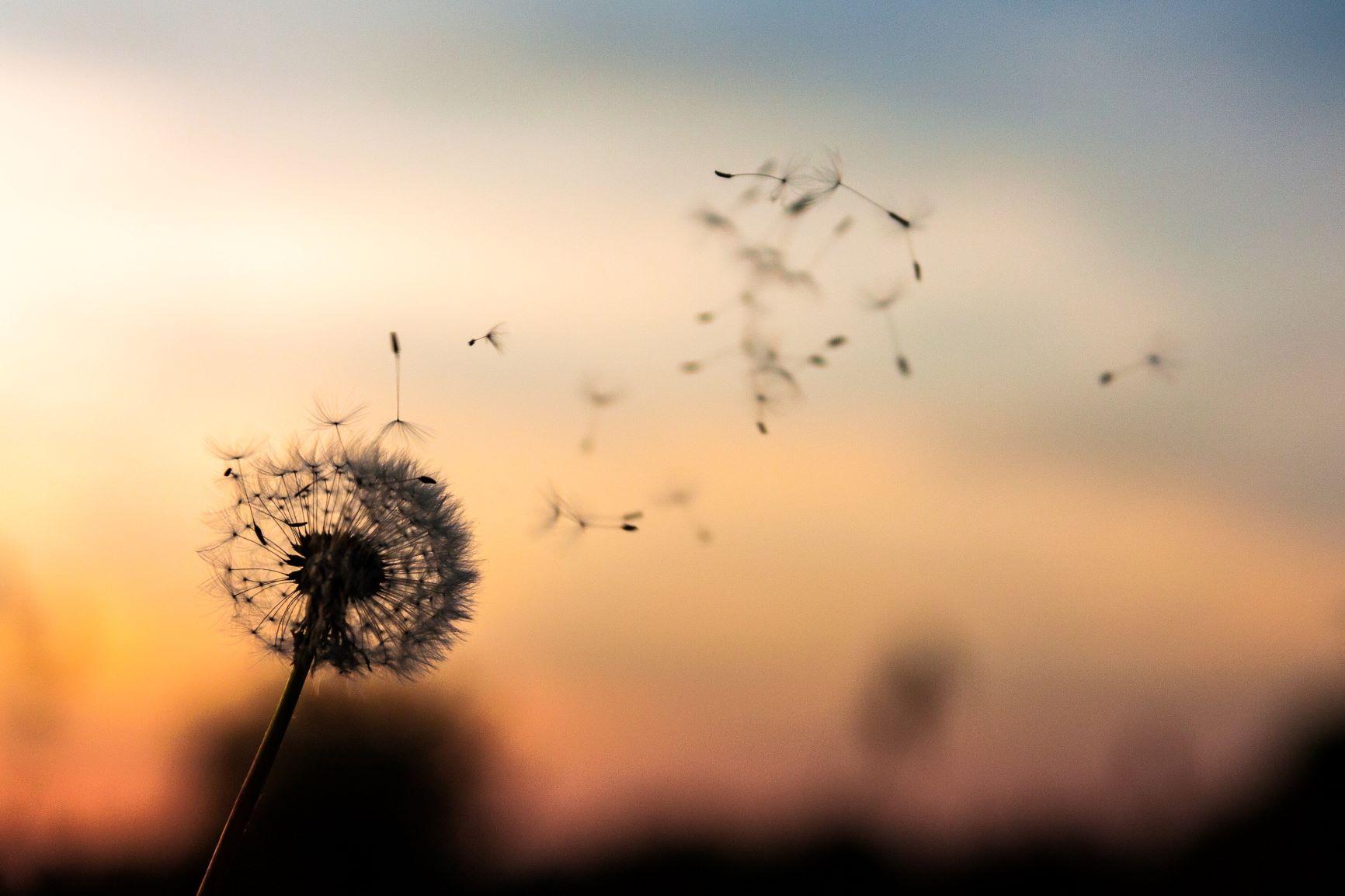flower-wind-fly.jpg