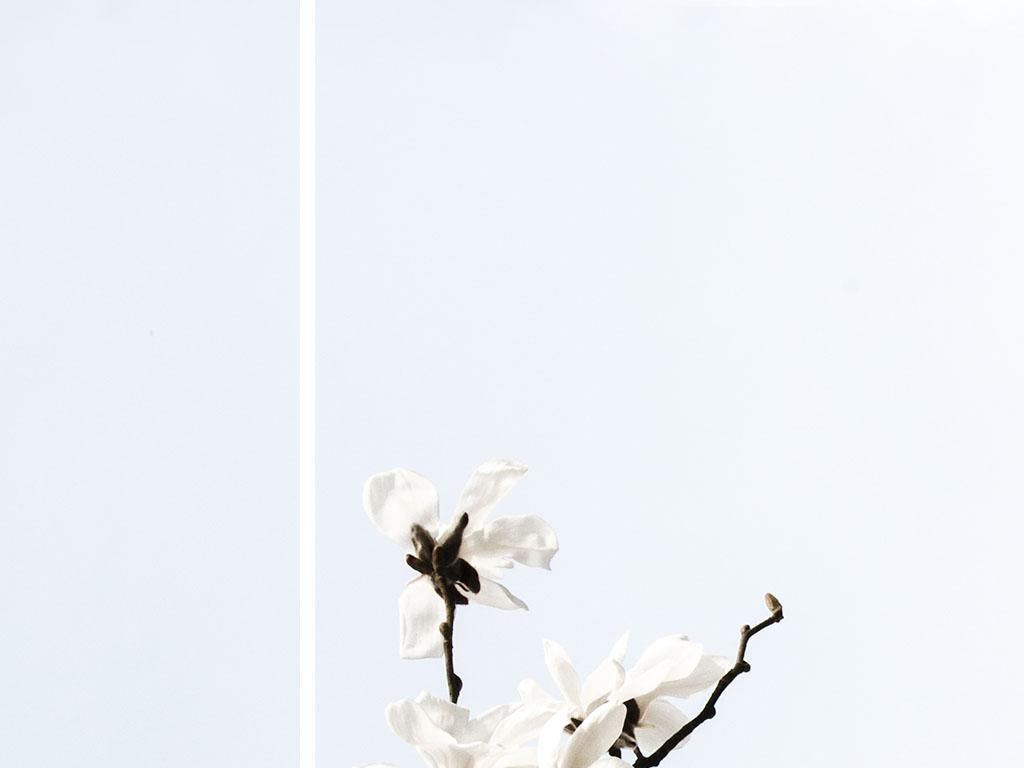 White Magnolia © Renae Smith