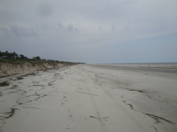 Wassaw Island NWR, where I was fortunate enough to spend Memorial Day.