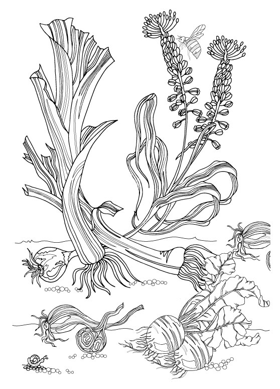 Leeks,-beets.jpg
