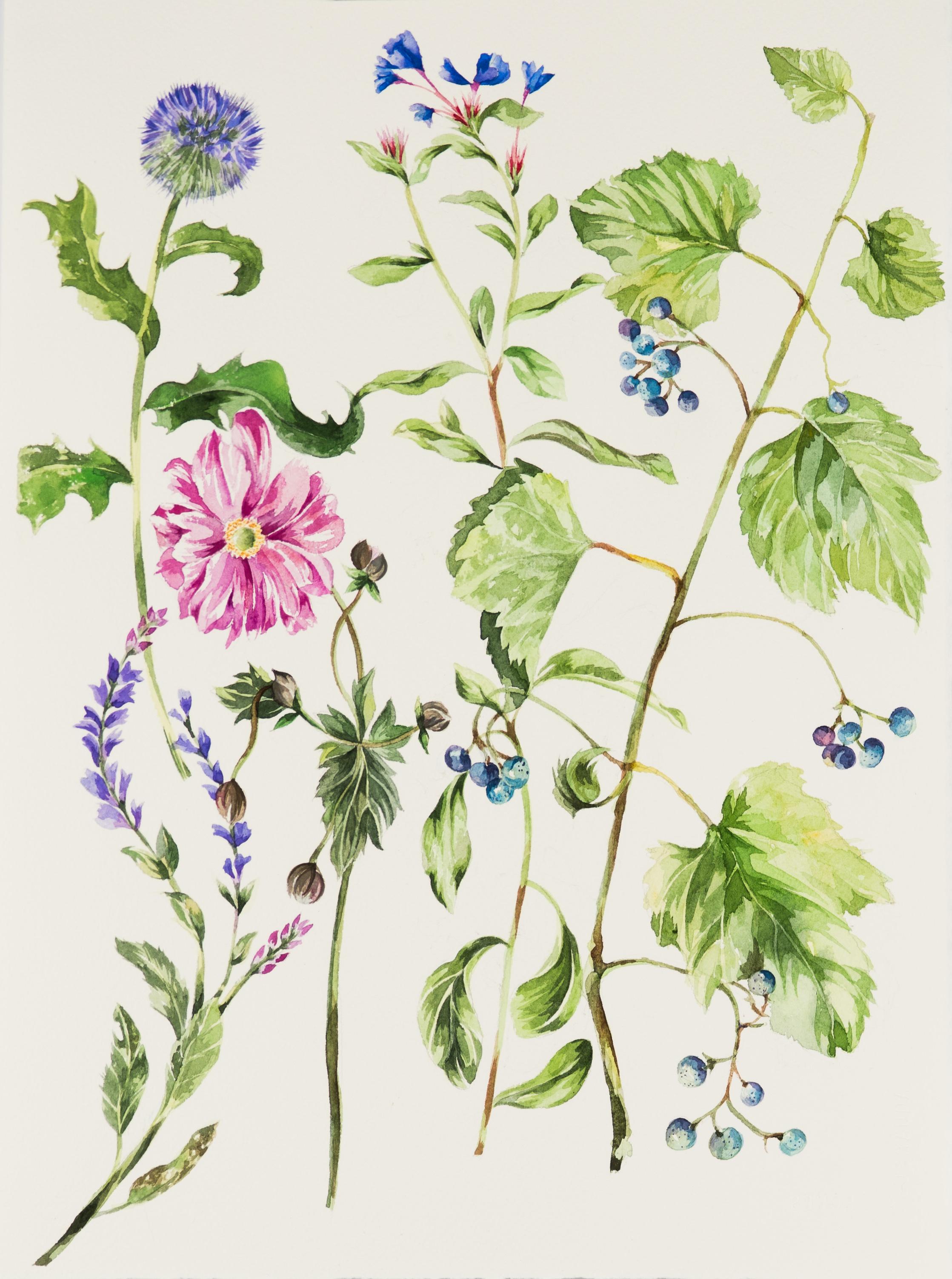 "Botanical 15.5x11.25"" watercolor"