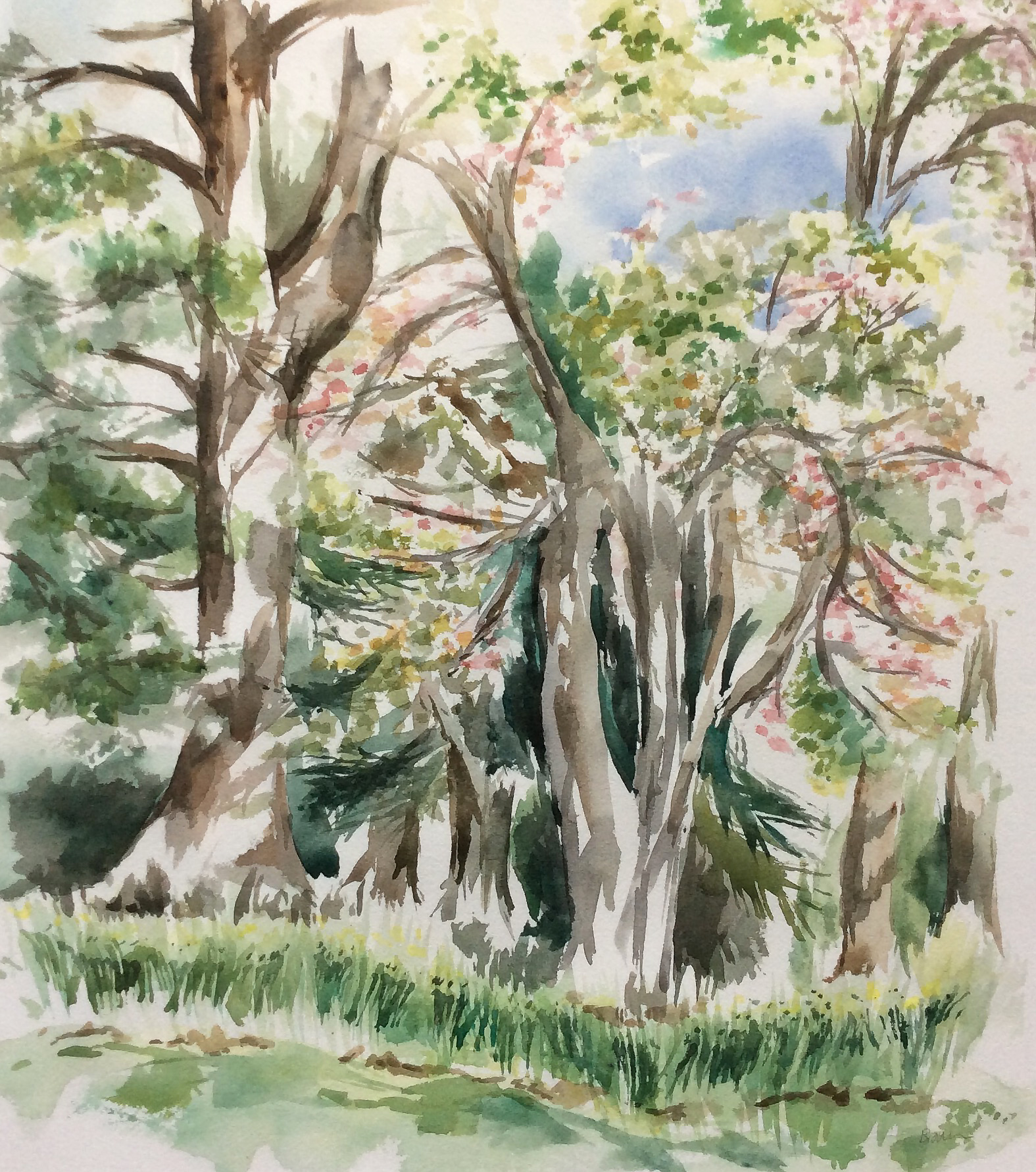 """Spring Trees 15.5 x 17.5"""" Watercolor"""