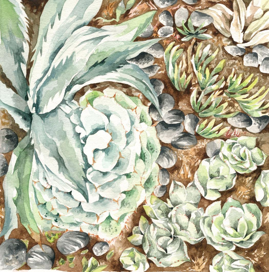 "Cactus Study 7 x 7"" Watercolor"