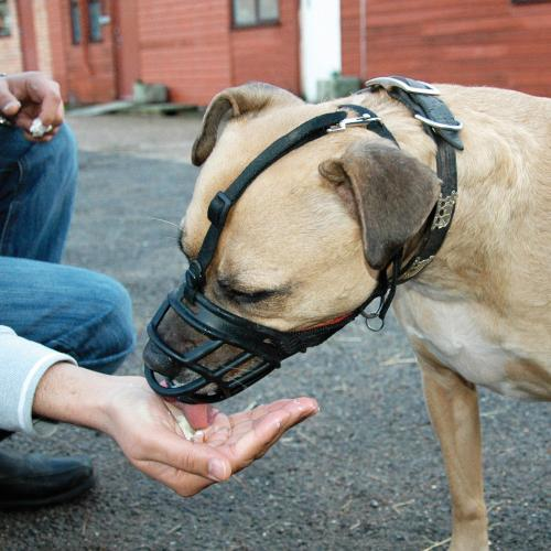 A muzzle should not push against the eyes or squish the nose and allow the dog to eat, drink, and breath comfortably.