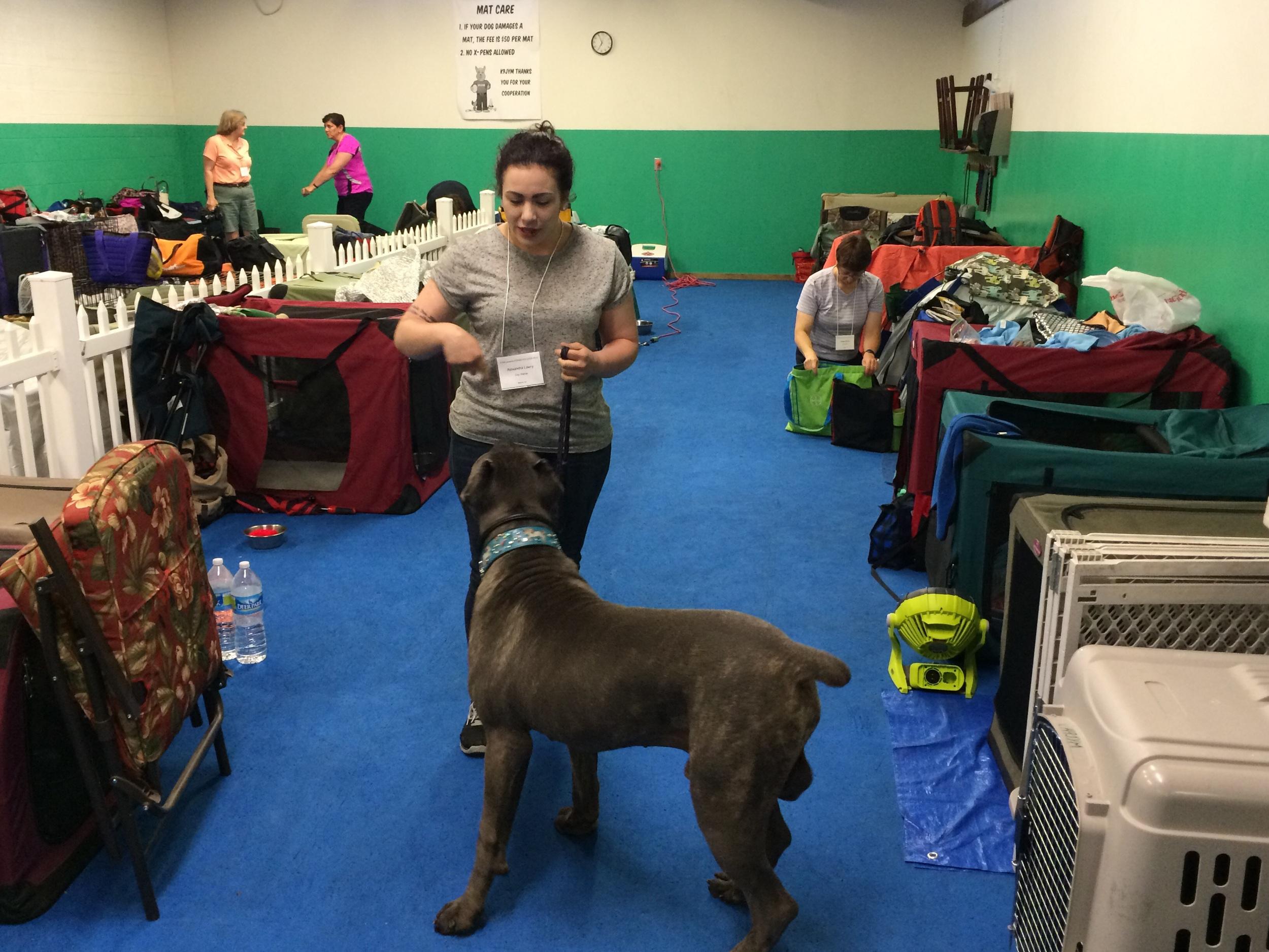 Big dogs love to work too!