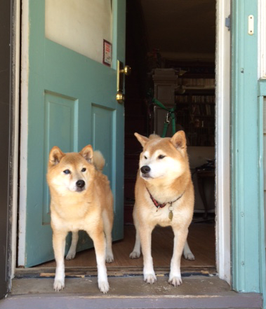 My dogs Ginger and Haiku, respecting the doorway boundary.