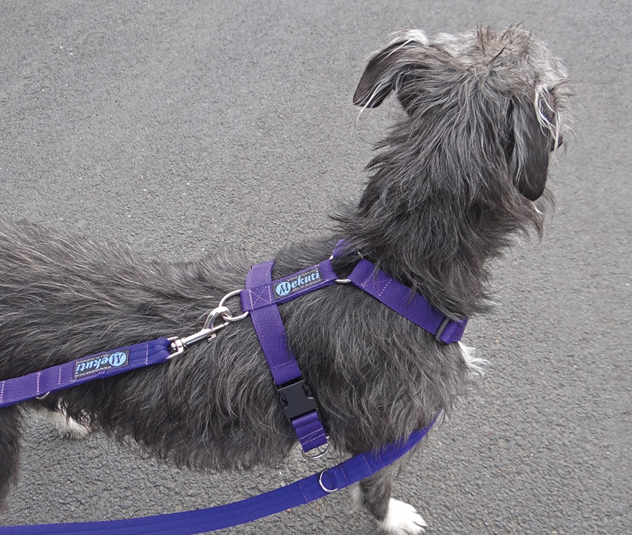 The Balance Harness. The rear attachment allows for two points of connection to steer the dog but also does not tighten like the Freedom Harness does.