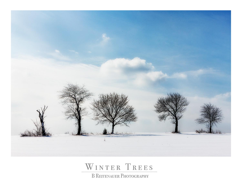 Winter Trees.jpg