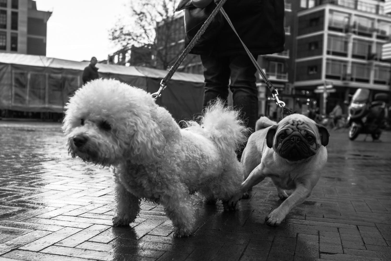 fokko muller street photography - 131130 - 004.jpg