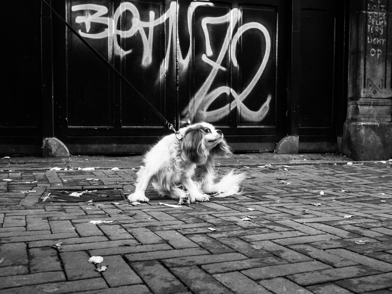 fokko muller street photography - 141018 - 015.jpg