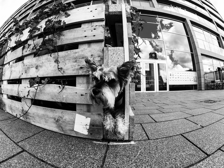 fokko muller street photography - 160820 - 004.jpg