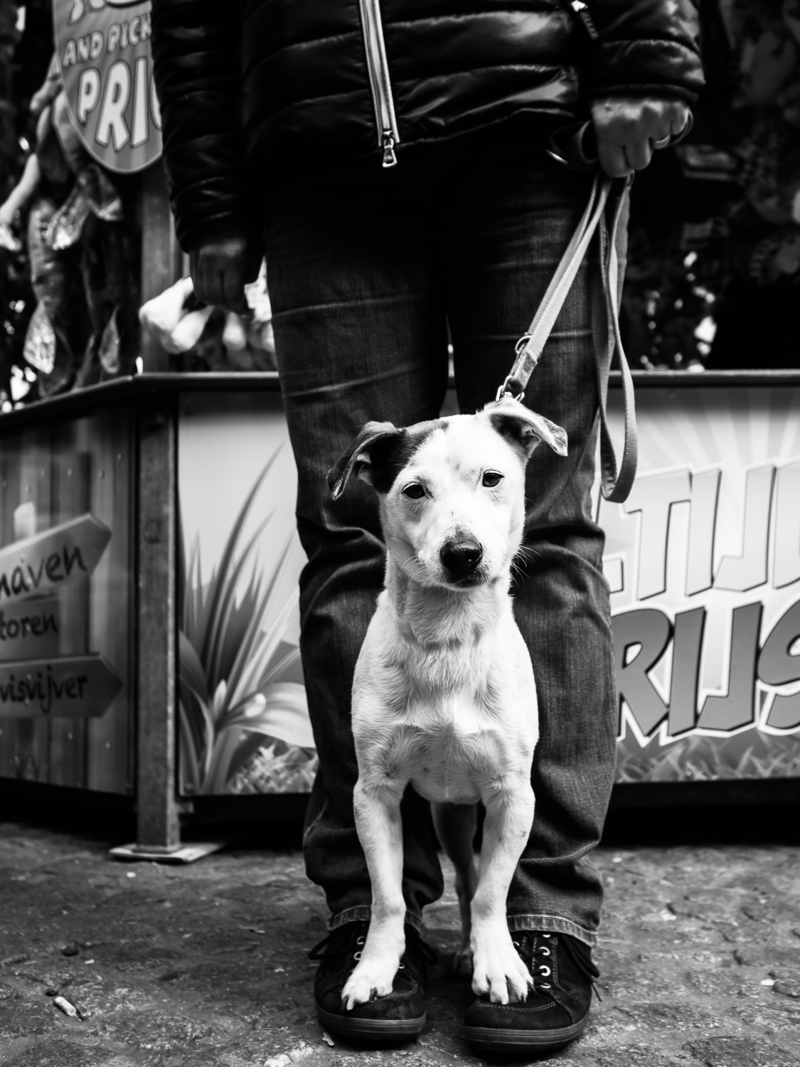 Photo taken in Amsterdam in April 2017 during the fun fair on the Dam Square. I wouldn't take my dog to a fun fair as they hear much better than human beings. It was very very noisy. The dog doesn't seem to care though. I liked the way he was standing on the shoes of his owner. Of course I added this dog to my    Street Dogs series   .  Shot with Olympus OMD1 Mark 2 and Olympus 17mm f/1.8.