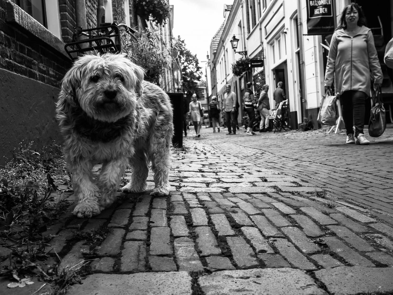 fokko muller street photography - 170729 - 002.jpg