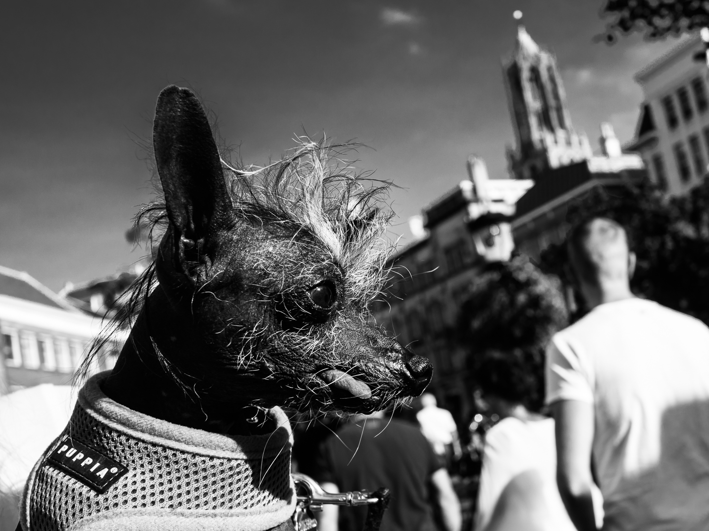 fokko muller street photography - 160924 - 004.jpg